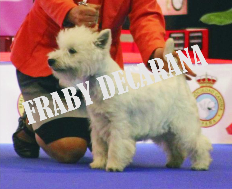 Fraby Decarana Mayo 16-.jpg