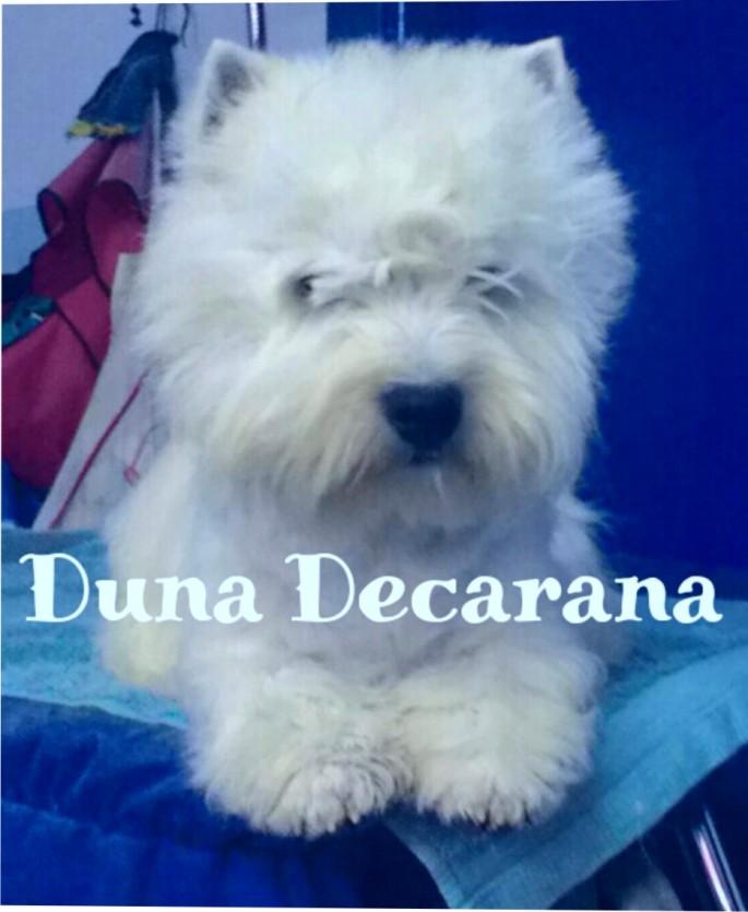 Duna_Decarana